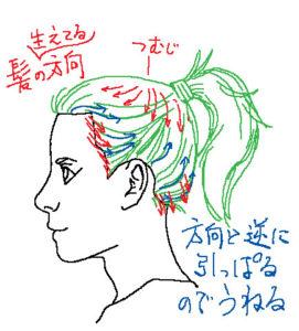 髪の生え方