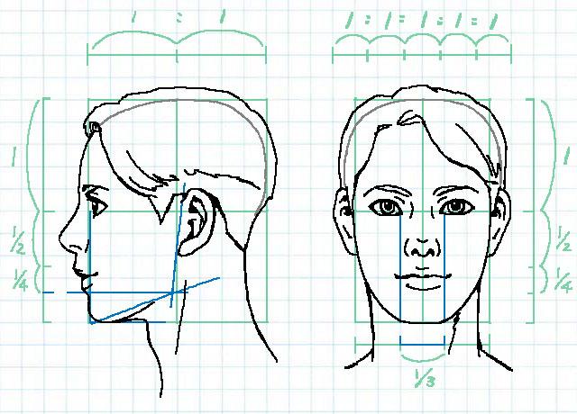 顔の比率~顎