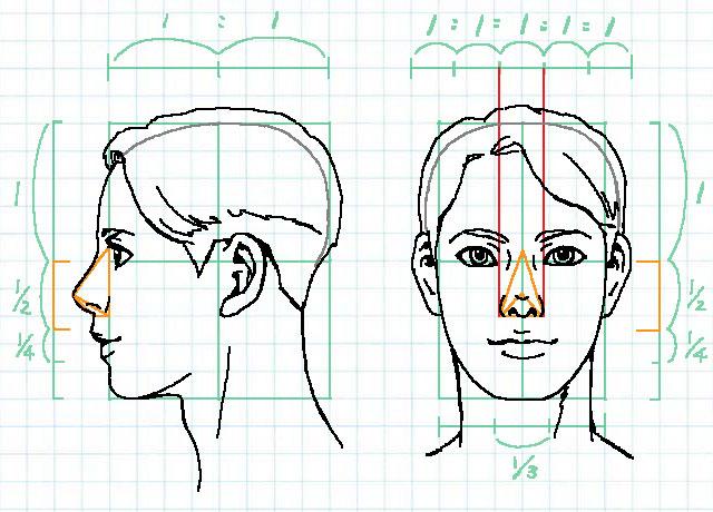 顔の比率~鼻