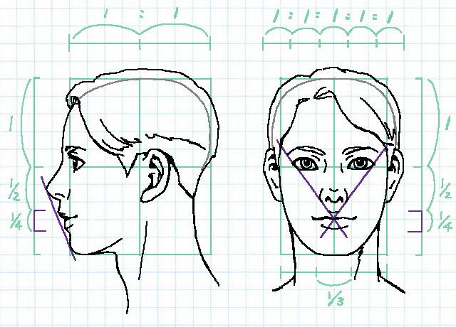 顔の比率~口