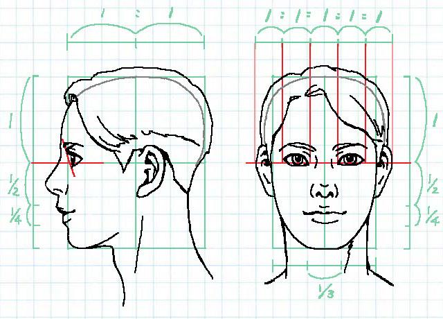 顔の比率~目