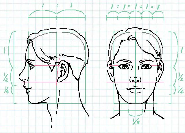 顔の比率~耳