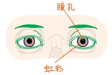 図:瞳孔と虹彩
