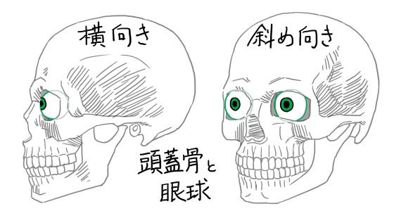 図:頭蓋骨と目玉