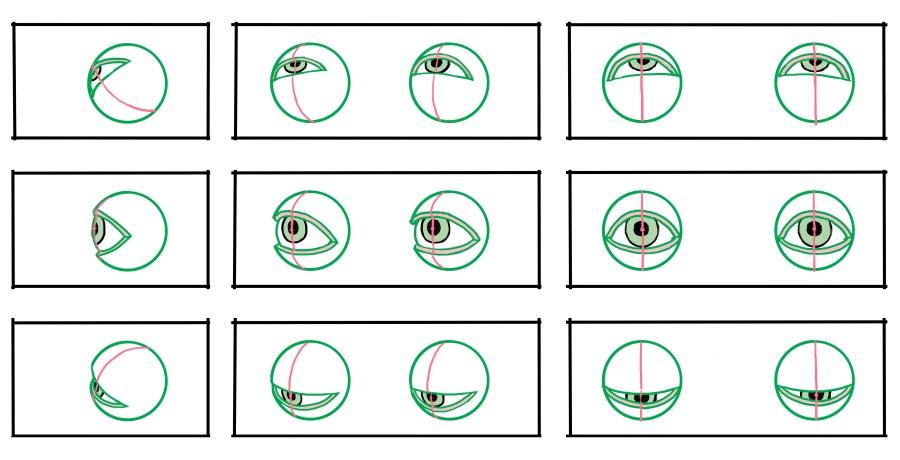 図:目玉とまぶた