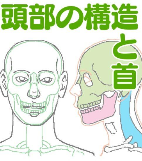 イラストを描くための人の頭と首の構造、動きとバランス