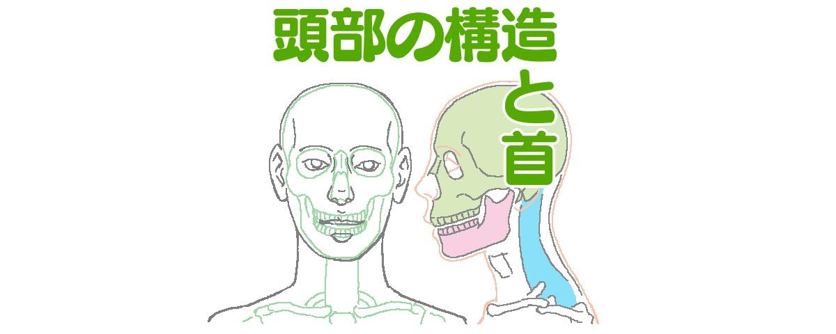 イラストを描くための人の頭と首の構造動きとバランス ライン