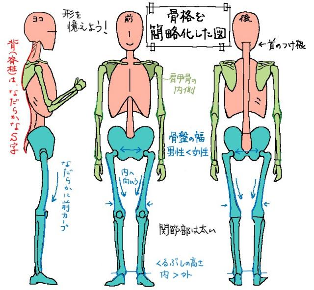 骨を簡略化