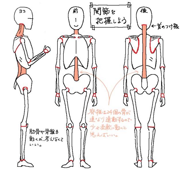 関節の位置