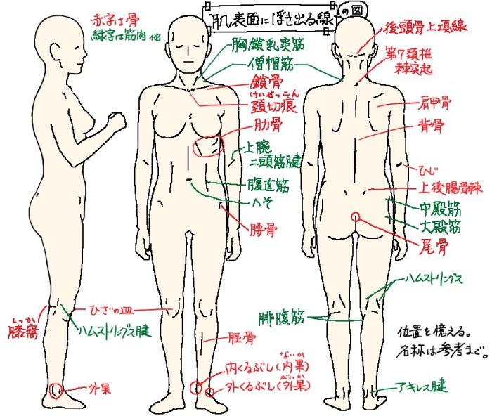 肌表面に浮き出る線