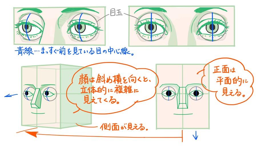 真正面と斜め向きの目