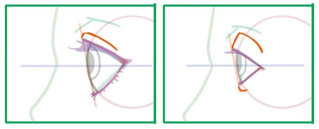 横向きの目の描き方~まぶたのシワ