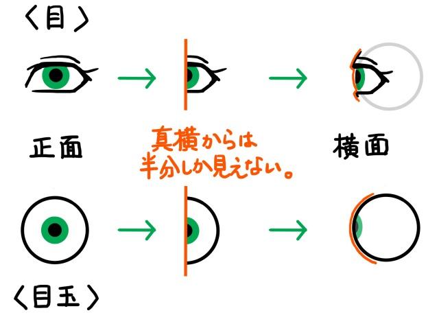 目と目玉の見え方