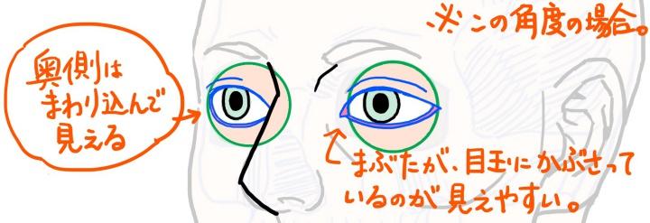 斜めから見た眼球とまぶたの図
