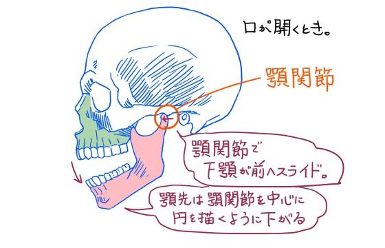 下顎骨と顎関節