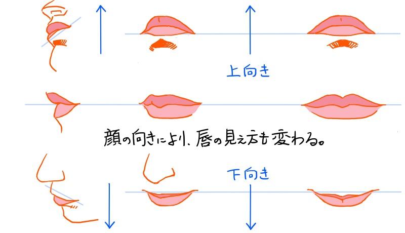 唇の見え方